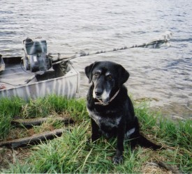 boat with Stump-Jumper mud motor and dog in foreground